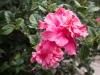 Canon EOS 6D-4854.jpg